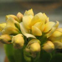 цветы :: Мария Пашкова