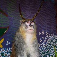 Новый вид рогатых обезьян :: Юрий Рекеть