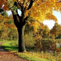 Осенний колорит :: Милешкин Владимир Алексеевич