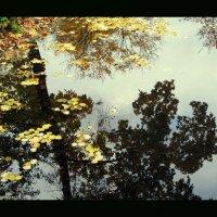 Осень :: vadim