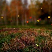 Листья пожелтелые по ветру летят... :: Егор Плетенец