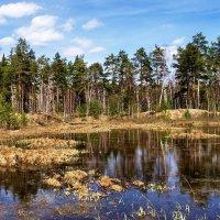 Пробудились мшарные болота... :: Лесо-Вед (Баранов)