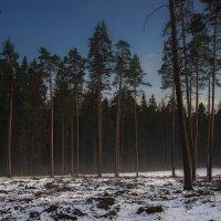 Туманный блеск крон :: Алексей Бордуков