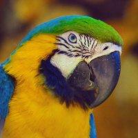 Zoo :: Eddy Eduardo