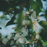 Spring :: Алина Филатова