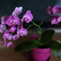 Орхидеи :: ИГОРЬ ЧЕРКАСОВ