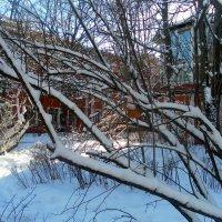 Снежок :: Агриппина