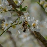 Весна :: Александр Пушкарёв