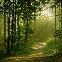 Утро в лесу :: Милешкин Владимир Алексеевич