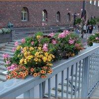 Цветы  у ратуши :: Вера