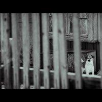 одиночество.... :: Юлия Богданова
