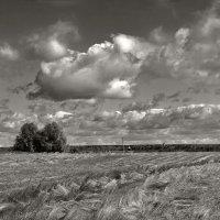 осенее поле :: Galina