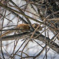 Вот и в наш лес пришла весна. :: Сергей Щелкунов