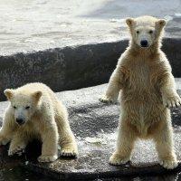 - Мамочка, ты не утонешь!? :: Михаил Бибичков