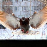 Вот такой,  с  огненными крыльями,  прилетел.... :: Валерия  Полещикова