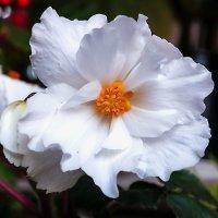 Садовый цветок :: Сергей Семенов