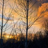 Когда солнце на закате.. :: Юрий Стародубцев