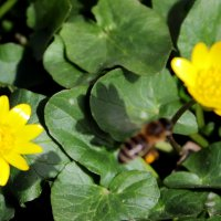 Тень от летящей пчелы :: Юрий Гайворонский