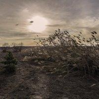 Сухая весна 2015го :: Юрий Клишин