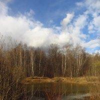 IMG_4676 - Лесное озерцо :: Андрей Лукьянов