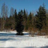 Солнечный денек в лесу :: Наталья Лунева