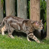 хищник в зоопарке Барселоны :: Svetlana Plasentsiia