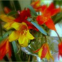 Полевые тюльпаны..... :: Людмила Богданова (Скачко)