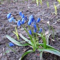 Радость весны :: Андрей Снегерёв