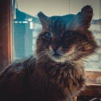 Великий кот. :: Света Кондрашова