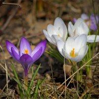 Весна! :: Михаил Дрейке
