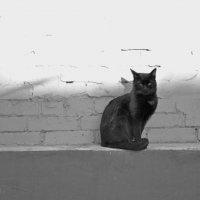 черно-белая :: Игорь Попов