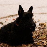 Собака на море :: Полина Белушкина