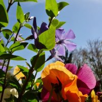 Гродские цветы... :: СветЛана D