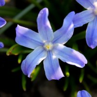 пасхальные цветы :: Катерина Шинтарь