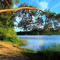 Лесное озеро :: сергей
