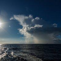Tropical Rain :: алексей афанасьев