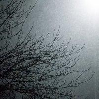 Снегопад :: Екатерина Исупова