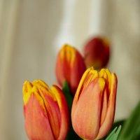 тюльпаны оранжевые :: Ангелина К