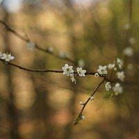 весна :: Natalia Kalyva