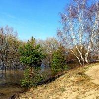 Понимают реку берега... :: Лесо-Вед (Баранов)