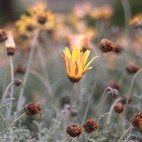 colors of spring :: Roman Beim