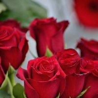 Розы :: Юрий Анипов