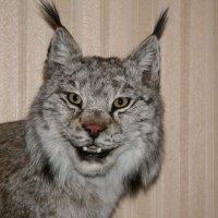 Мой любимый зверь :: Александр Володарский