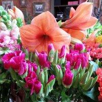 в цветочном магазине... :: Марина Харченкова