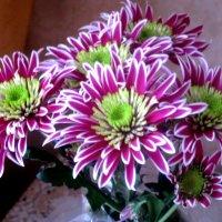 Праздничный букет хризантем :: Елена Семигина