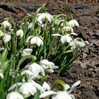 Весна :: Геннадий Храмцов