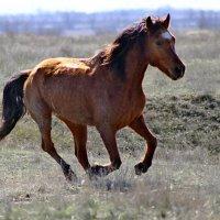 Конь. :: Юрий Шатыгин