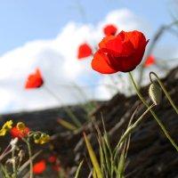весна (каланиты) :: Ефим Журбин