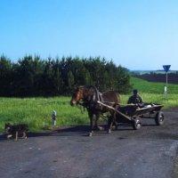 Деревенский пейзаж или мужчина на повозке с собакой :: Владимир Ростовский