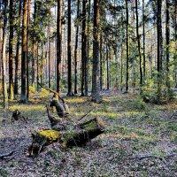 Весенний  лес. :: Валера39 Василевский.